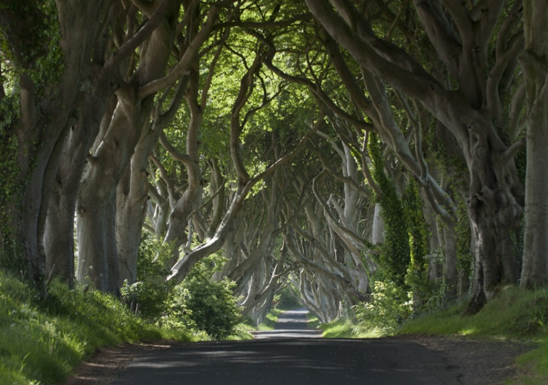 games of thrones dark hedges